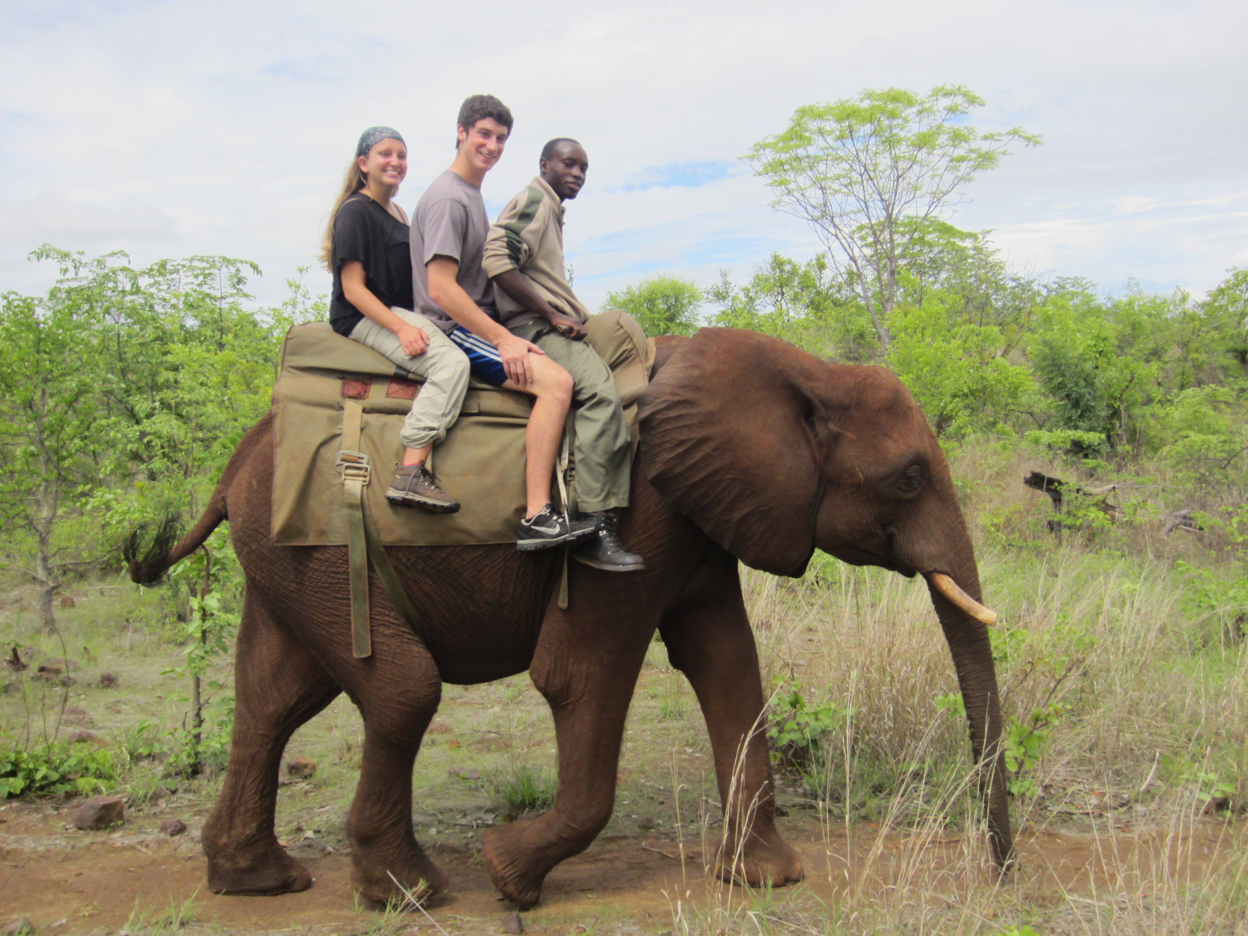 Discussion on this topic: How to Ride an Elephant, how-to-ride-an-elephant/